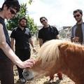 pony-bravo