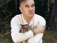 morrissey-gato