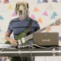 algodon-perro