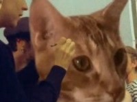 gato-rem