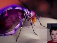 mosquitovideo