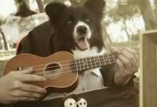 arizonas-baby-perros
