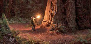 ann-proulx-bosque-infinito